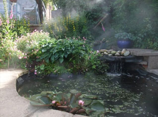 Fog enhances a garden water feature