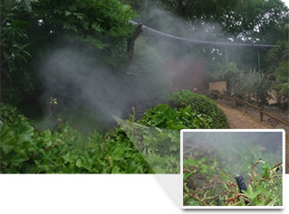Fogging Nozzle hidden at Chester zoo