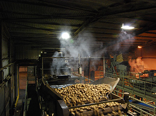 Root Vegetables Dust Suppression